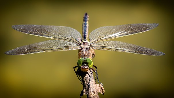 dragonfly-3456317__340